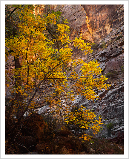 More colors of Spring Canyon, Utah - October 2012