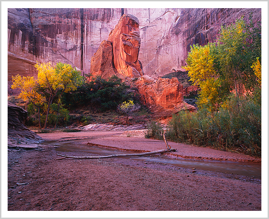 Fall Colors of Coyote Gulch