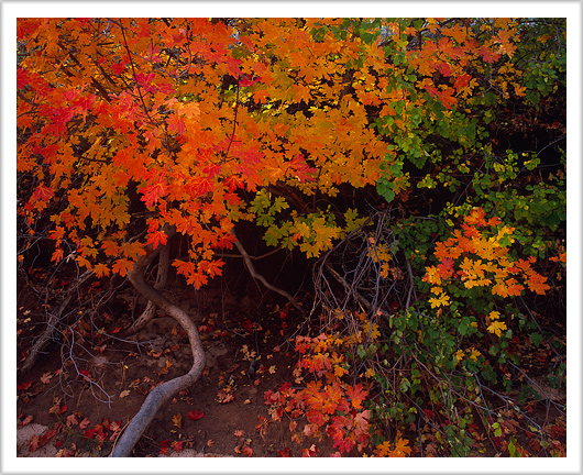 Fall Color of Zion