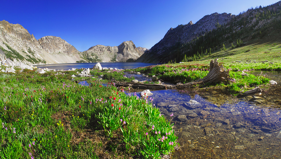 Mountain Stream, Flowers and Sawtooth Lake